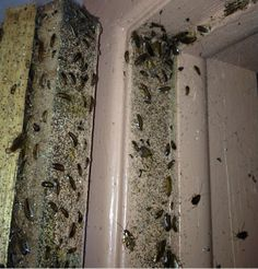 The bedroom - more cockroaches than you can find in Parliament House