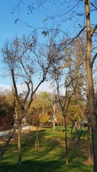 Emirgan Park