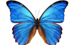 Butterfly's wing.png