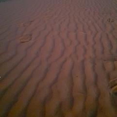 Dunes, desert camp